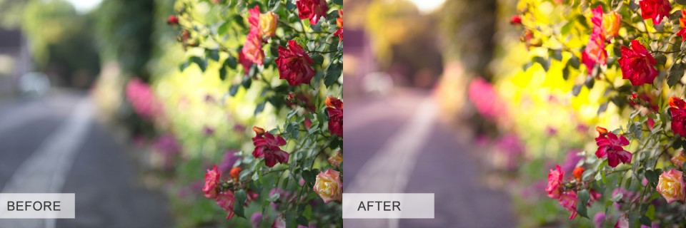 121 960x320 My Lightroom Journey (Rainbow Lightroom Preset)