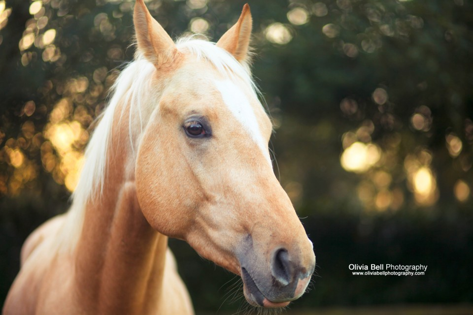 36small 960x640 Horse Portraits for Krugerrand