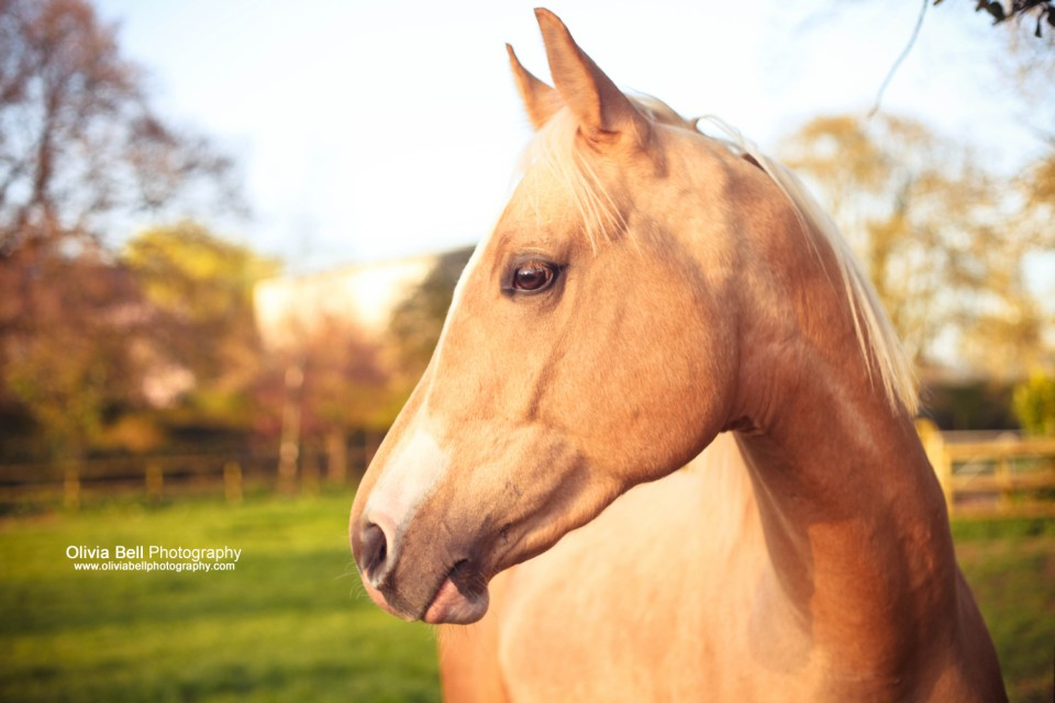 4small47 960x640 Horse Portraits for Krugerrand