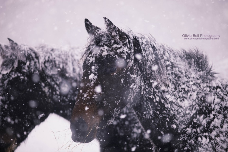 Horses in a Blizzard - Day 138/365