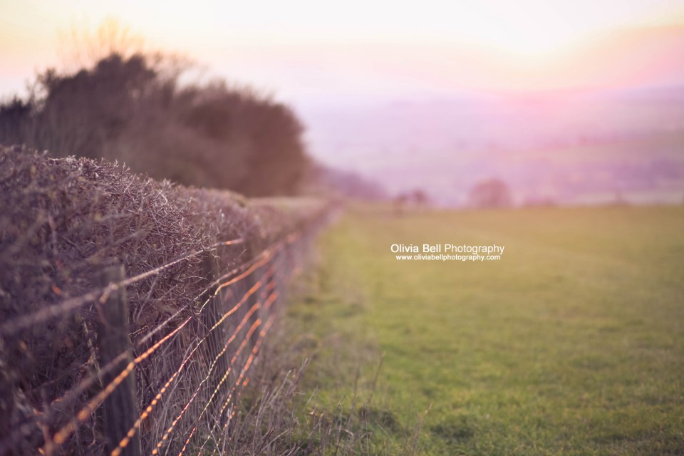 Sun-kissed Hedges - Day 230/365
